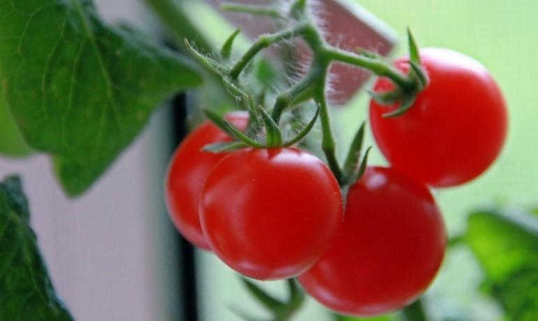 5 домашних растений для лечения депрессии