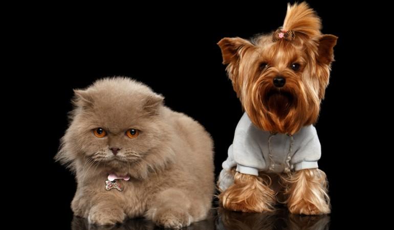 Собаки и кошки защищают от рака