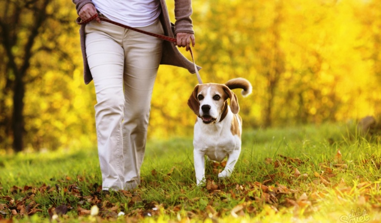 Ученые заявили, что владельцы собак живут дольше