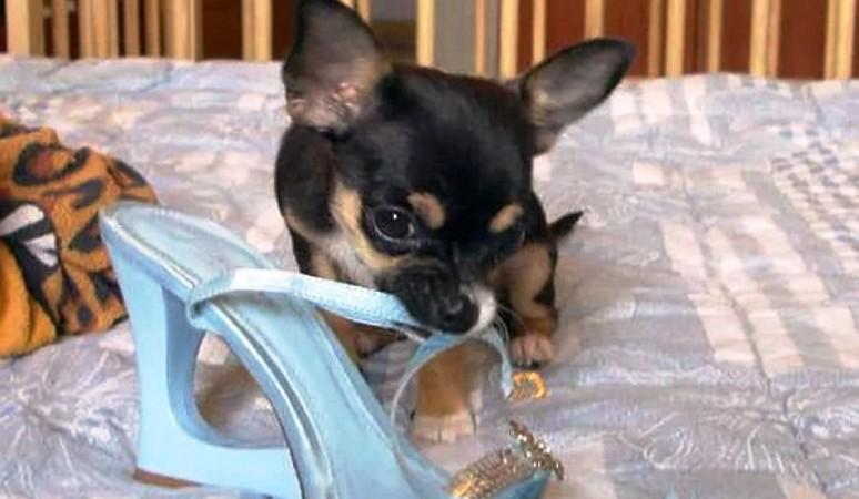 Нехватка витаминов и странное поведение щенка