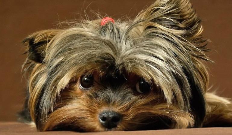 Почему бывает недержание мочи у собак