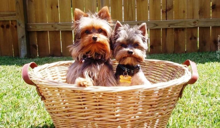 Дрессировка собак с помощь кликера