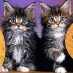 Почему у кошек бывает скверный характер