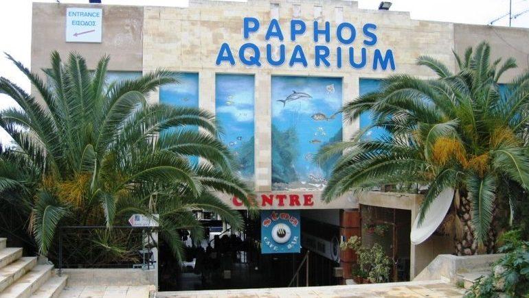 Аквариум Пафоса: уникальный подводный мир