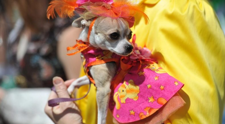 Как приучить собаку к одежде