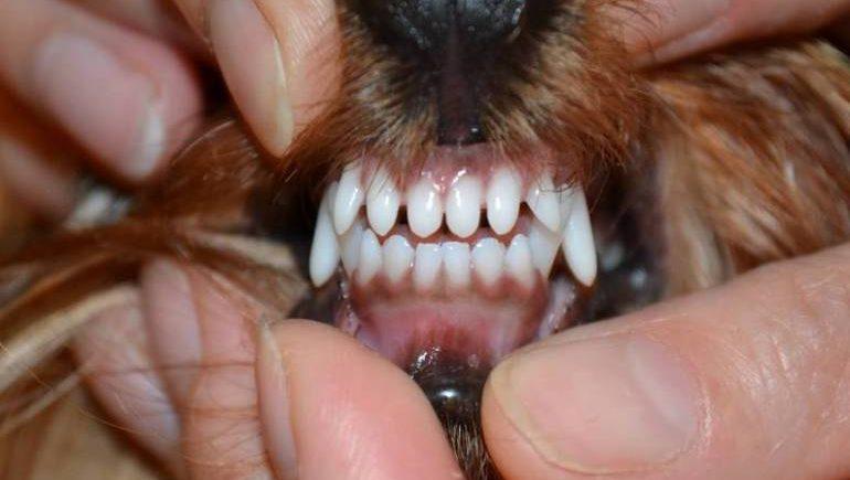 5 причин выпадения зубов у собак