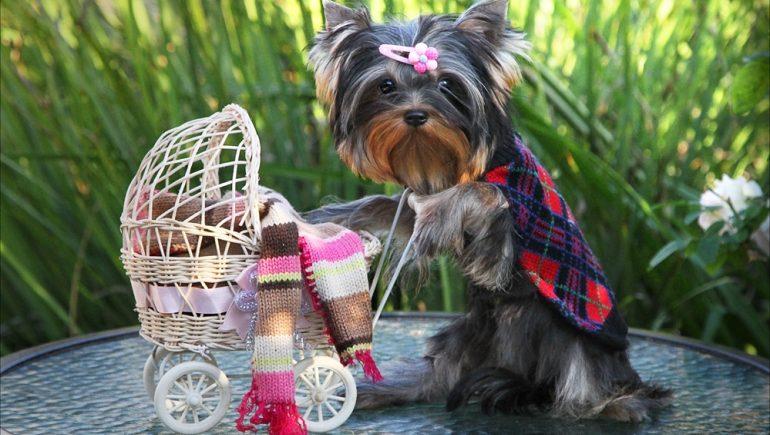 Причины появления и чем лечить понос у собаки