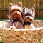 Правильная дрессировка собак с помощь кликера