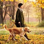 Прогулки с собаками продлевают жизнь