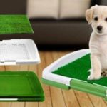 Как приучить маленького щенка к лотку