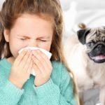 Каких животных могут завести дома аллергики