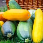 Полезные свойства кабачков для организма человека
