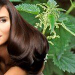 Полезные свойства крапивы для ваших волос